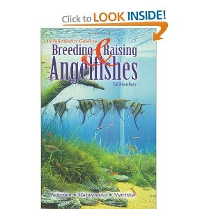About Angelfish book review